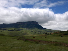 African pastures (h) Tags: africa sky cloud mountain green landscape southafrica cattle pasture kwazulunatal