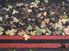(robep) Tags: road street uk autumn england london fall leaves pattern pavement noparking eustonstation nostopping doubleredlines