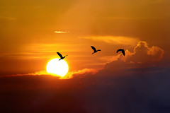 #850C6834- Lets race to the sun (Zoemies...) Tags: sunset nature birds clouds wildlife waduk balikpapan manggar zoemies
