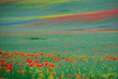 hommage  monet (Sandra Bartocha) Tags: blue red summer green yellow monet poppies impressionism millefiori oilseedrape cornflowers greenpastures blhendelandschaften fieldsofcolour
