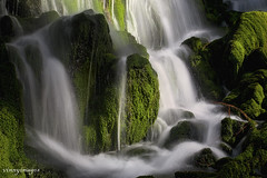 Mossy Around (Vinnyimages) Tags: water moss northwest fallcreekfalls vinnyimages wwwvinnyimagescom mossyaround