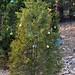 360_Trees_2011_082