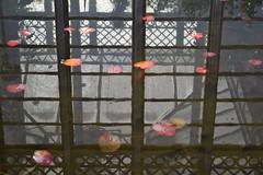 Domus lotus (TheManWhoPlantedTrees) Tags: music nature water leaves lines metal reflections garden lotus aquatic liquid picnik oneword nikond3100 myphotost tmwpt liqui|d|ays