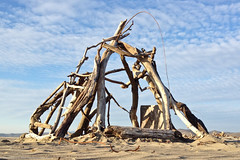 Driftwood teepee lean-to construction found on Morro Strand