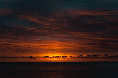 Another day (ClaudiaJR) Tags: sea orange sunrise skies seagull