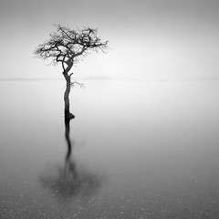 Solitude (Boyd Hunt) Tags: longexposure bw mist tree water mono solitude fineart lone loch minimalism lomond minimalist bestminimalshot