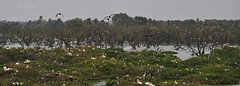Vedanthangal Bird Sanctuary! (Jehane*) Tags: india birds nikon chennai birdsanctuary jehane 2011 migratorybirds vedanthangal nikkor55200mmlens vedanthangalbirdsanctuary nikond5000 jehanephotography