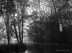 Misty morning at the pond (b & w version) (Barry Potter (EdenMedia)) Tags: blackwhite nikon yorkshire earlymorning northyorkshire kirkhammerton barrypotter nikond40 barrypotternet sunsetandmist afsnikkor18105mm1556ged edenmedia barrypotteredenmedia