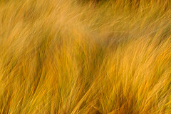 Wind in the Dunes (flowerpics09) Tags: motion grass gold coast day graphic dunes dream struktur balticsea structure gelb dezember rgen ostsee dnen mecklenburg sturm d700