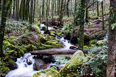 Rio da Fraga II (Perurena) Tags: trees rio river agua arboles marin galicia bosque tronco pontevedra fraga efectoseda riodafraga