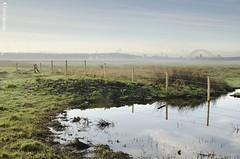 Misty Morning..... (dave-baker) Tags: morning bridge mist david reflection misty rural fence landscape happy canal pond nikon baker cheshire january friday 2012 runcorn widnes hff davebaker d7000