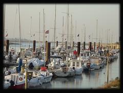 Port d'Etaples sur Mer -Steve.©-
