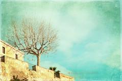 Nubes en Alella .... (Mariló Irimia) Tags: winter sky clouds morninglight nikon bluesky textures cielo nubes invierno texturas sunnyday cieloazul díasoleado masía alella psedition árboltree luzdelamañana olétusfotos panoramafotográfico marilóirimia marilóirimiafotografía ediciónconps