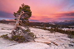 Day After Day - Pothole Dome, Tuolumne Meadows, Yosemite National Park (Joshua Cripps) Tags: sunset mountains nationalpark alpine yosemite sierranevada mountdana tuolumnemeadows lembertdome tuolumneriver lenticularclouds mammothpeak potholedome kunacrest mountgibbs indurotripod leegndfilters nikond7000 acratechballhead