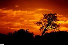 Lake Manyara National Park - Tanzania - Africa (TLMELO) Tags: africa park sunset red sky mars orange tree kilimanjaro clouds tanzania freedom african laranja free céu vermelho safari mount national monte serengeti árvore marte lakemanyara selvagem africana africano musictomyeyeslevel1 kilimanjaromount flickrstruereflection1 flickrstruereflection2 flickrstruereflection3 flickrstruereflection4