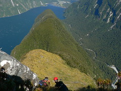 Descending... (tobybear) Tags: newzealand mountain nature hiking climbing views nz kiwi milfordsound tramping mitrepeak nativebush fiordland aortearoa