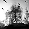 up with the birds // hamburg (pamela ross) Tags: blackandwhite bw sun tree birds silhouette pen olympus sw ep1