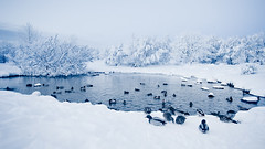 Winter wonderland (viii) (oskarpall) Tags: