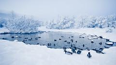 Winter wonderland (viii) (oskarpall) Tags: