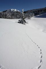 nyomok a hóban (> akela <) Tags: traces gutin urma nyomok szekatura kakastaréjfelé idénazelsőigazánszéptélinap