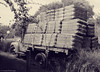 In self defense / En defensa propia (Claudio.Ar) Tags: bw tree argentina car truck topf50 buenosaires sony dsc h9 temaiken claudioar claudiomufarrege