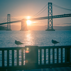 Two Birds (Sebastian (sibbiblue)) Tags: sanfrancisco usa bird birds sunrise baybridge morningsky 18105 bsquare nikond7000