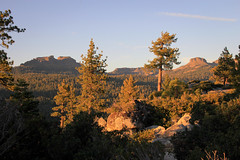 High Sierra Sun and Shadow (San Francisco Gal) Tags: california shadow sky sun mountain nature canon october afternoon fir volcanic conifer sonorapass 2011 jeffreypine lakedonnelloverlook
