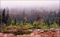 Alaska Landscape - Klondike Highway (blmiers2) Tags: travel brown mist green nature fog alaska landscape nikon klondikehighway d3100 blm18 blmiers2