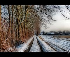 * Snow * (alfvet) Tags: winter snow nikon ngc npc neve inverno vigevano d60 frameit veterinarifotografi mygearandme mygearandmepremium mygearandmebronze mygearandmesilver mygearandmegold mygearandmeplatinum mygearandmediamond ringexcellence blinkagain dblringexcellence tplringexcellence flickrstruereflection1 flickrstruereflection2 flickrstruereflection3 flickrstruereflection4 flickrstruereflection5 flickrstruereflection6 flickrstruereflection7 eltringexcellence rememberthatmomentlevel4 rememberthatmomentlevel1 rememberthatmomentlevel2 rememberthatmomentlevel3 rememberthatmomentlevel7 rememberthatmomentlevel9 rememberthatmomentlevel5 rememberthatmomentlevel6 rememberthatmomentlevel8 rememberthatmomentlevel10 vigilantphotographersunite vpu2 vpu3 vpu4 vpu5 vpu6 vpu7 vpu8 vpu9 vpu10