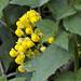 Flora dopo Ocros (prov. Ayacucho) (2)