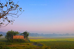 A Winter Morning in Bangladesh (Z A Y A N) Tags: life winter sunset people mist home colors yellow fog rural sunrise canon landscape photography eos living asia village harvest foggy hut mustard lonely rgb bangladesh mystic mustardfield geographic drunkphotography nationalgeographic 18mm wintermorning southasia ruralhouse cropfield 2011 zayan manikganj livelihood farmershouse 550d yellowland beautifulbangladesh villagelifestyle rebelt2i kissx4 zayan1904 negativespacephotography gettyimagesbangladeshq12012