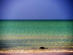 (turgidson) Tags: blue ireland sea sky irish 6 mer green beach studio lens four coast la raw zoom olympus x telephoto coastal developer micro pro wicklow f28 bray lamer omd thirds irishsea vario m43 silkypix em5 35100mm 35100 mirrorless microfourthirds olympusem5 olympusomdem5 panasonic35100 panasoniclumixgxvario35100mmf28 hhs35100 silkypixdeveloperstudiopro6 p5222124