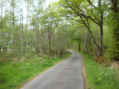 Trees (Simon Varwell) Tags: knoydart inverie