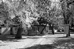201604-12 (GenJapan1986) Tags: blackandwhite film japan spring university   cherryblossoms  miyagi  tohokuuniversity  ilfordhp5plus 2016      nikonnewfm2