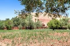 063 (Michael Williams Photography) Tags: atlasmountains morocco marrakech approved ouarzazate saharadesert atbenhaddou doorofthedesert siteofnumerousmovies exampleslawrenceofarabiajewelofthenilelasttempationofchristgladiatorusedinpartsofgameofthrones