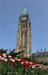 Peace Tower and tulips - 4937 (DASA Images) Tags: ontario canada flower spring ottawa tulip parliamenthill tulipfestival peacetower 2016