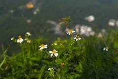 _MG_1801 (daveli1011) Tags: hongkong done clearwaterbay  highjunkpeak