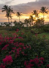 Last sunset with flowers (Major Clanger) Tags: sunset maui wailea