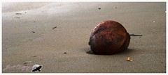 Beach Coconut - Pola, Oriental Mindoro, Philippines (Joost Crispyn) Tags: travel beach strand reisen coconut philippines canvas pola kokosnuss philippinen pmc reizen leinwand doek filipijnen canvas kokosnoot photography oriental sonydsch9 crispyn joost crispyn pmc mindoro