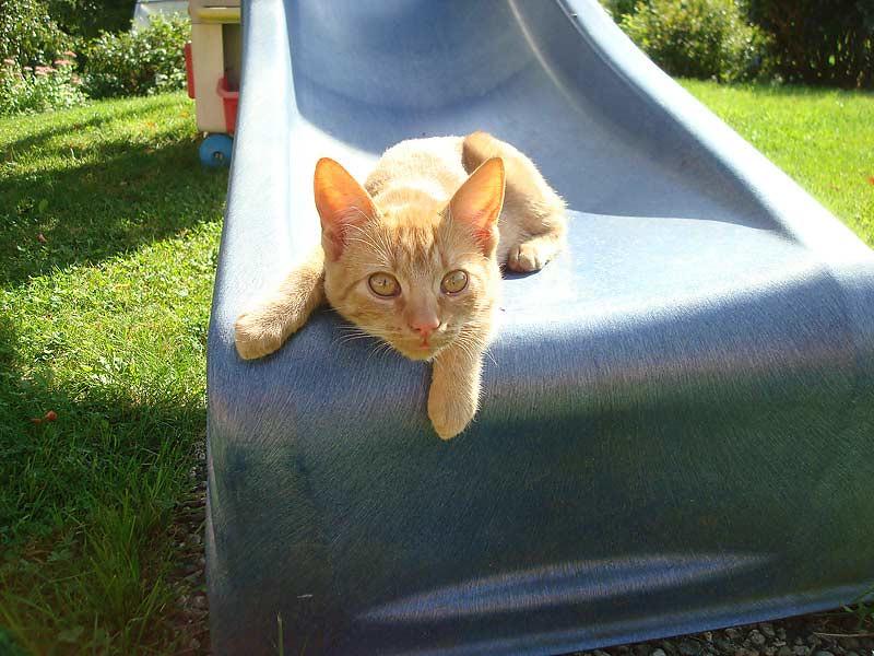 Ferienhof Laux - Katze auf der Rutsche