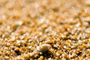 (danielle kiemel) Tags: ocean november light sunset macro beach landscape spring sand nikon photographer bokeh shell australia nsw seashell centralcoast goldenhour wamberal 105mmf28 2011 beachsand sandmacro daniellekiemel wamberalbeach nikond5000