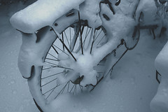 Snow Invasion (mimilogy) Tags: christmas blackandwhite snow art nature colors bicycle canon photography creative christmastree fallingsnow eos550d
