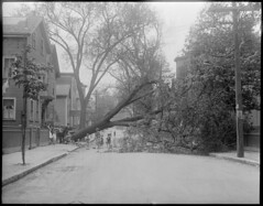 Wind and storm, Cambridge, MA (Boston Public Library) Tags: weather storms floods lesliejones