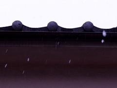 The first snow speeding down (nofrills) Tags: snow japan tokyo