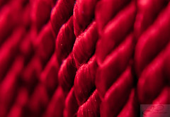 Cord (JPridemore) Tags: red macro cord diopter cording