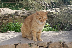 2011 Formentera (jose Gonzalvo) Tags: animal gato baleares 2011