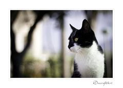 my cat! (DomenicoAliberti.it Photography) Tags: nature animal cat canon 50mm reflex flickr gallery campania bokeh award gatto animali 60 watcher carlzeiss dcanon carlzeissplanart1750 60d canon60d flickraward carlzeiss1750 flickrunitedaward flickrawardgallery domenicoaliberti