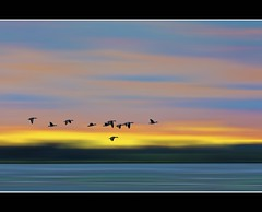 Flowing and flying (Wim Koopman) Tags: blue sky orange holland water netherlands dutch birds yellow river landscape photography flying photo moving nikon colorful waves stock flowing stockphoto stockphotography d90 nedreland wpk