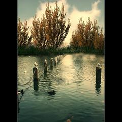 St James Park III (Spedding Photos) Tags: uk winter lake london nature britain ducks stjamespark wow1 wow2 wow3 wow4 wow5 bestcapturesaoi mygearandme mygearandmepremium mygearandmebronze mygearandmesilver mygearandmegold mygearandmeplatinum mygearandme1 mygearandmediamond mygearandme6platinum mygearandme2premium mygearandme3bronze mygearandme4silver mygearandme5gold chariotsofartists speddingsart aboveandbeyondlevel1 flickrstruereflection1 flickrstruereflection2 aboveandbeyondlevel2 aboveandbeyondlevel3