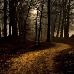 Untitled [explored #491 24/12/2011] (frata60) Tags: trees mist holland nature netherlands fog forest bomen nikon path pad natuur tokina explore glimmen d200 groningen 1224mm wow1 wow2 wow3 wow4 wow5 idream flickraward treesdiestandingup nikonflickraward cedruseternum flickrstruereflection1